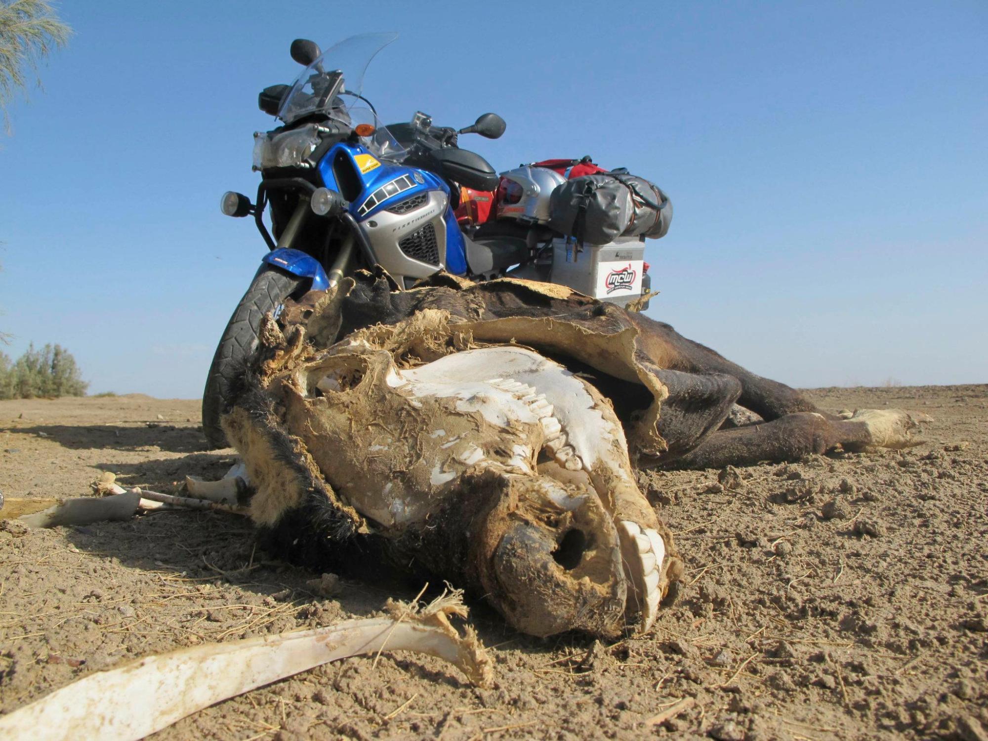 Ride across europe and asia, on yamaha Tenere