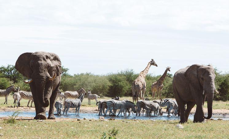 Wild Namibia